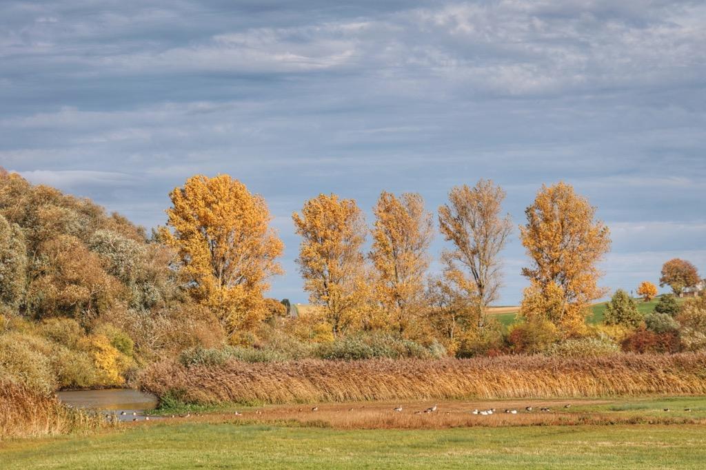 Reinheim Teich Herbst Impression