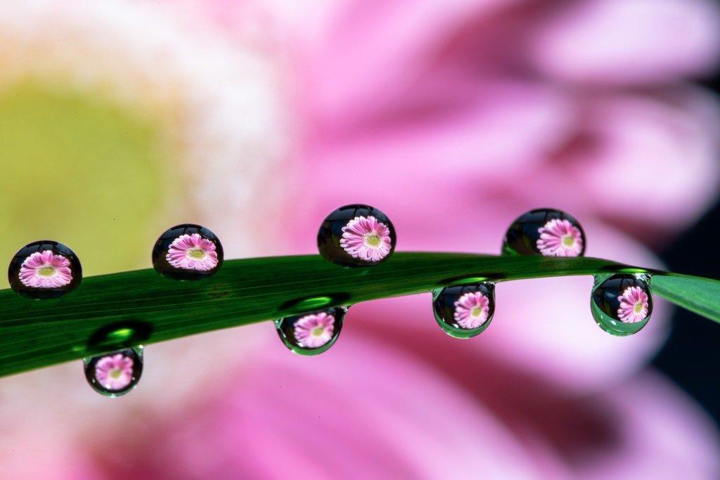 Wassertropfen Spiegelung Blüte